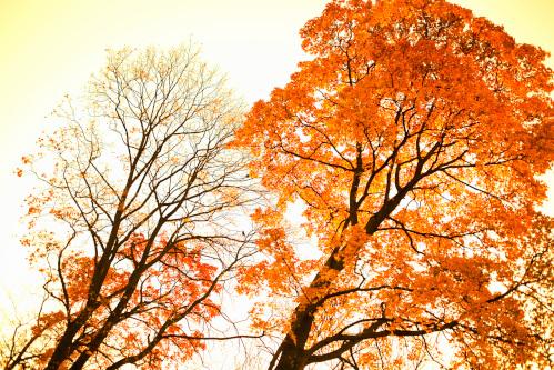 広葉落葉樹